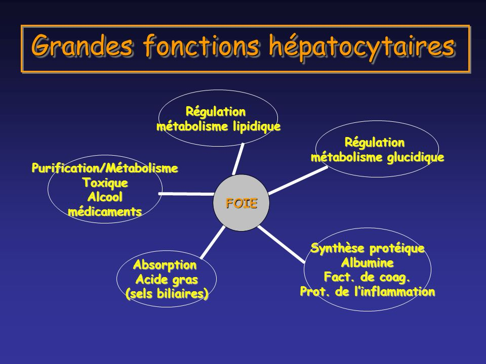 Grandes fonctions hépatocytaires