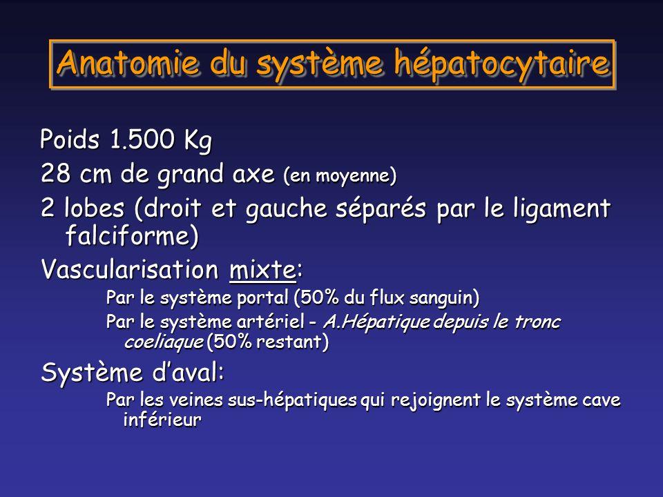 Anatomie du système hépatocytaire