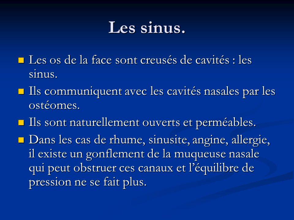 Les sinus. Les os de la face sont creusés de cavités : les sinus.