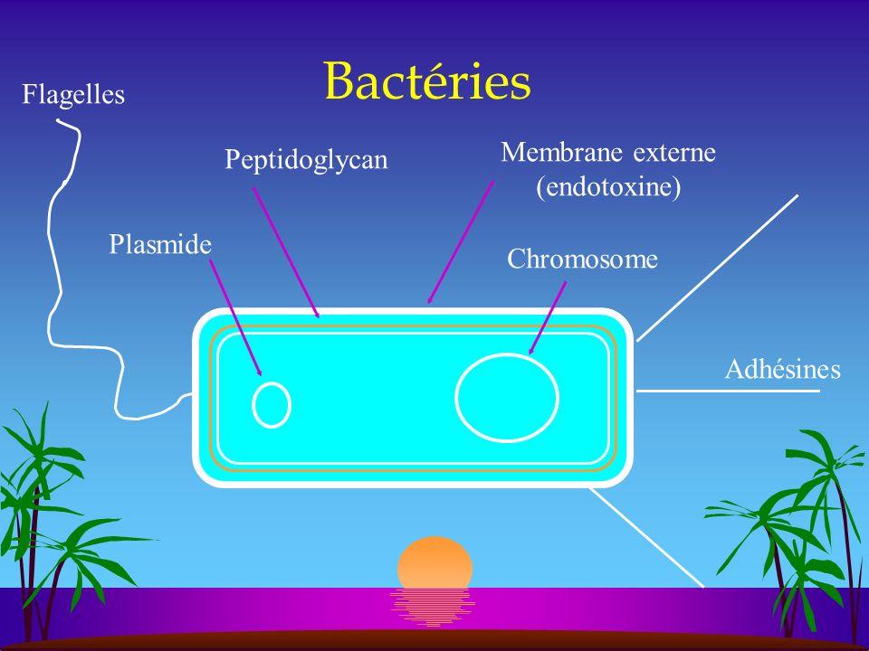 Bactéries Flagelles Membrane externe Peptidoglycan (endotoxine)