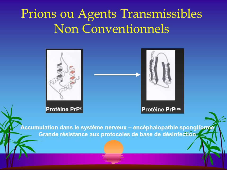 Prions ou Agents Transmissibles Non Conventionnels
