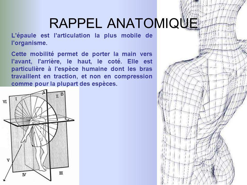 RAPPEL ANATOMIQUE L épaule est l articulation la plus mobile de l organisme.