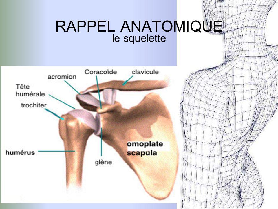RAPPEL ANATOMIQUE le squelette Clavicule