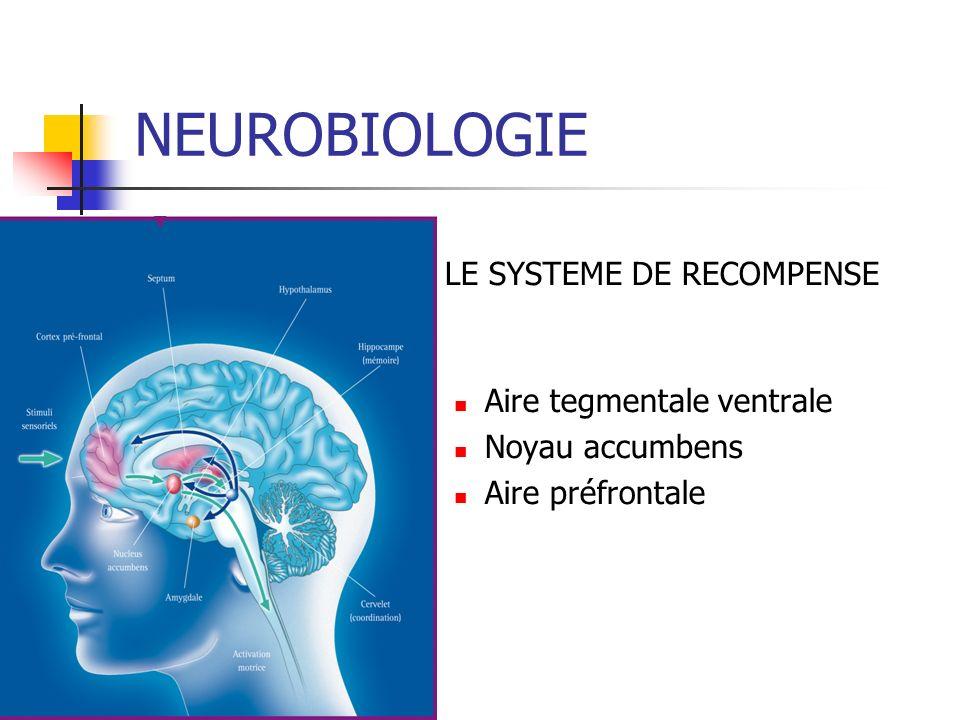 NEUROBIOLOGIE LE SYSTEME DE RECOMPENSE Aire tegmentale ventrale