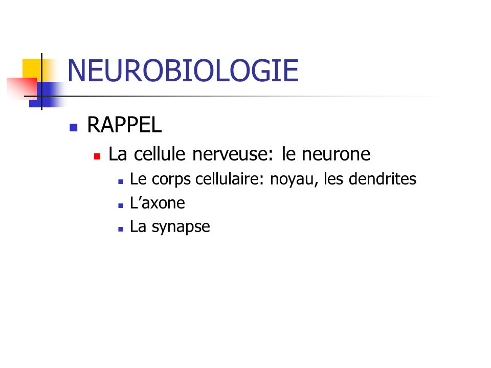 NEUROBIOLOGIE RAPPEL La cellule nerveuse: le neurone
