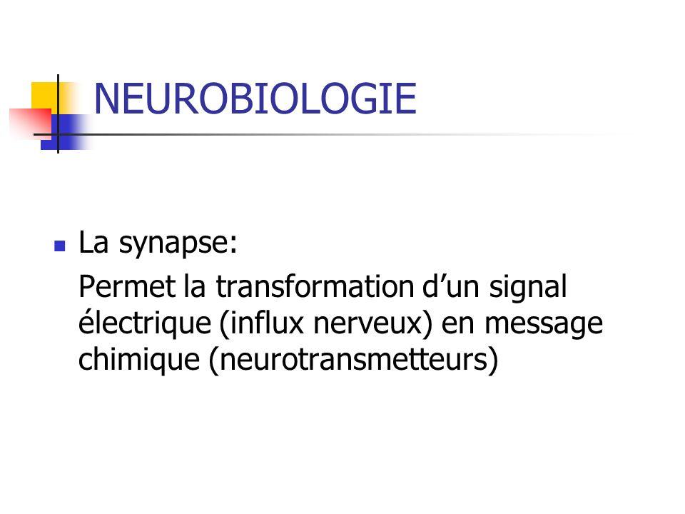 NEUROBIOLOGIE La synapse: