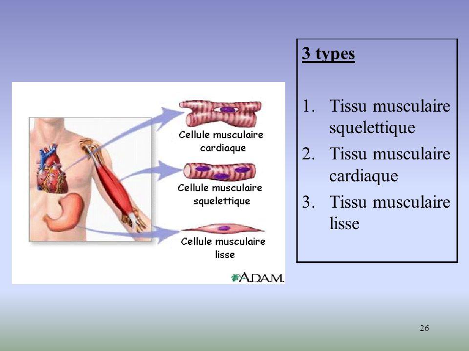 3 types Tissu musculaire squelettique Tissu musculaire cardiaque Tissu musculaire lisse