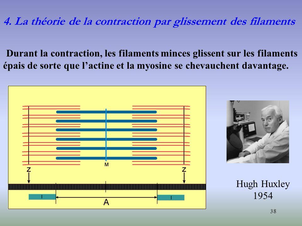 4. La théorie de la contraction par glissement des filaments