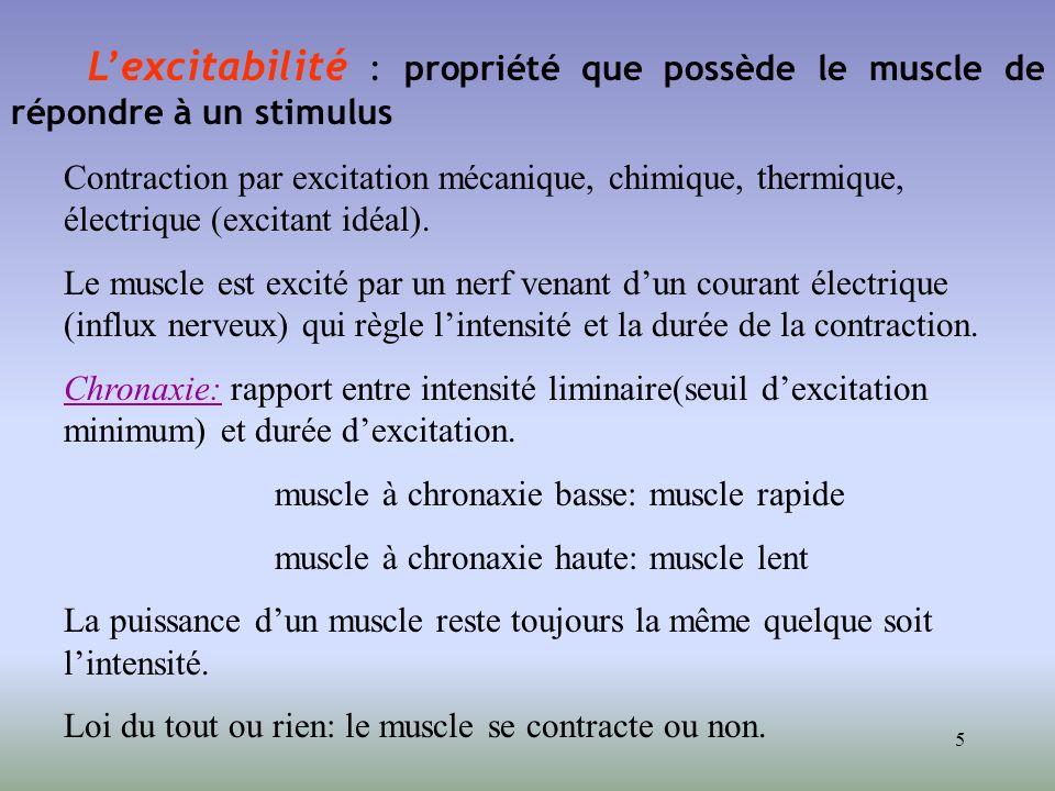 muscle à chronaxie basse: muscle rapide