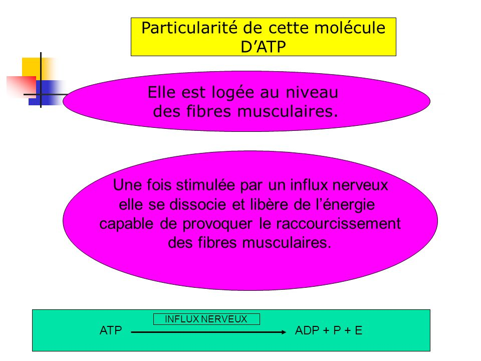 Particularité de cette molécule D'ATP