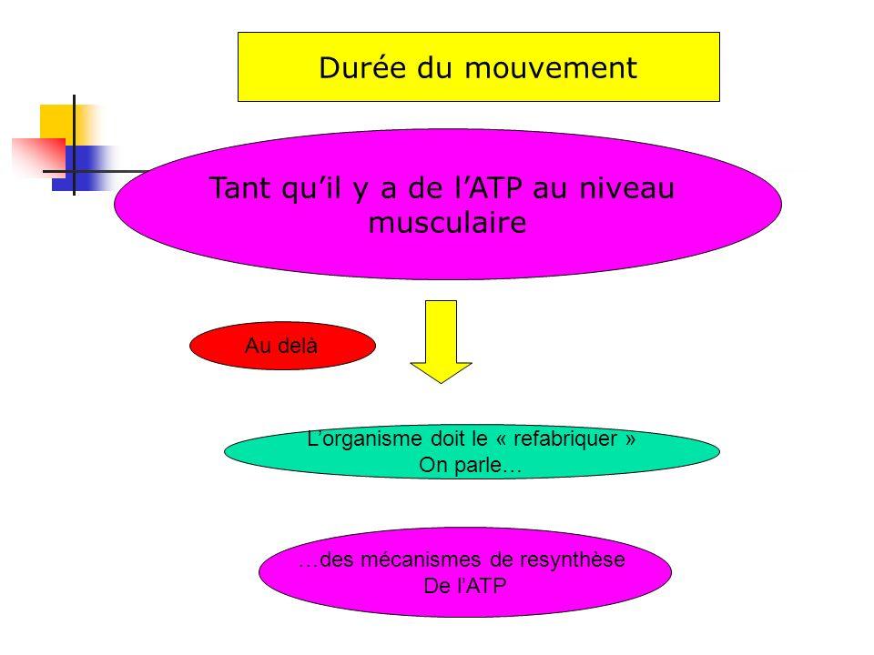Tant qu'il y a de l'ATP au niveau musculaire