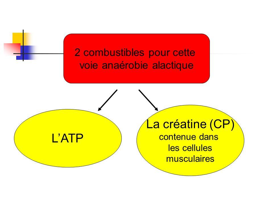 La créatine (CP) L'ATP 2 combustibles pour cette