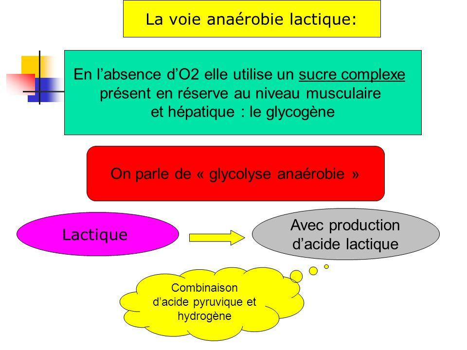 La voie anaérobie lactique: