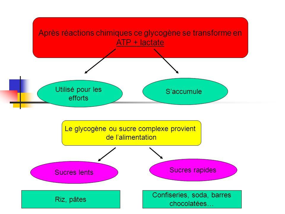 Après réactions chimiques ce glycogène se transforme en ATP + lactate