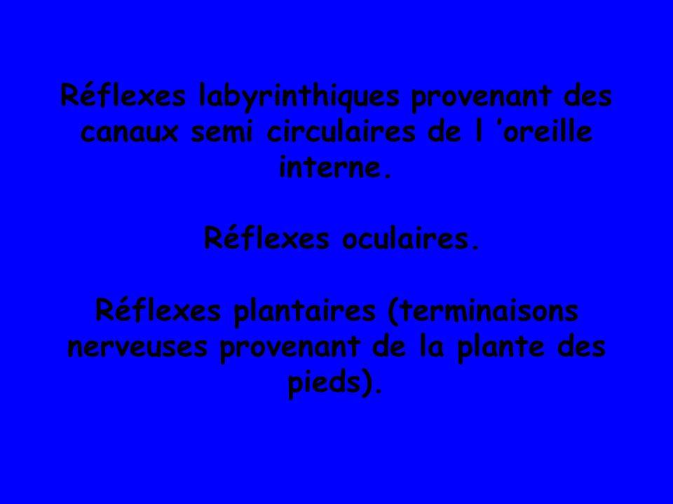 Réflexes labyrinthiques provenant des canaux semi circulaires de l 'oreille interne.