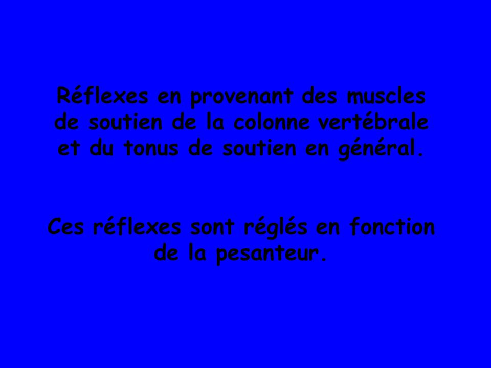 Réflexes en provenant des muscles de soutien de la colonne vertébrale et du tonus de soutien en général.