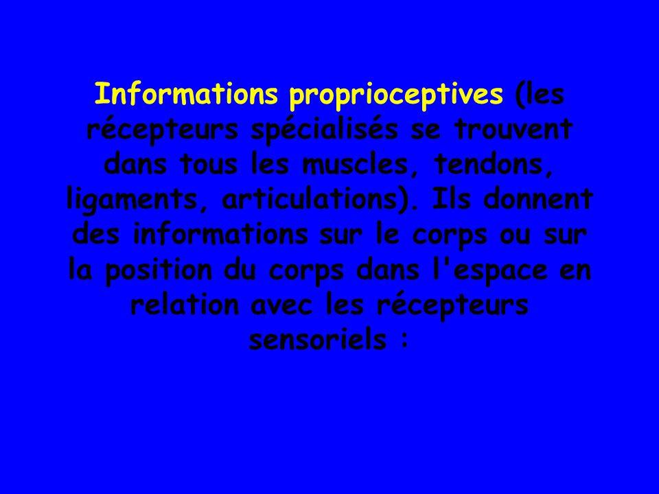 Informations proprioceptives (les récepteurs spécialisés se trouvent dans tous les muscles, tendons, ligaments, articulations).
