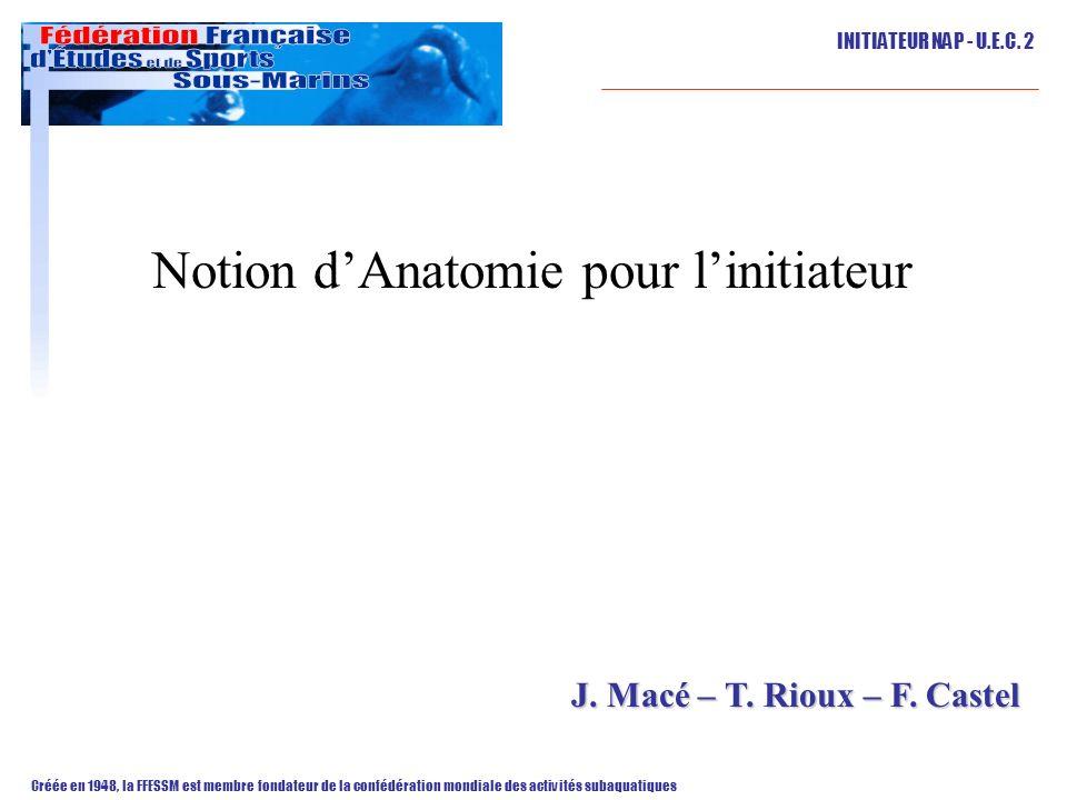 Notion d'Anatomie pour l'initiateur
