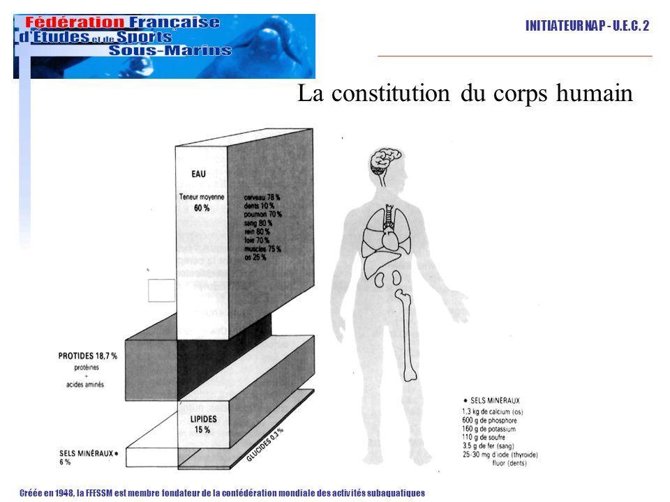 La constitution du corps humain