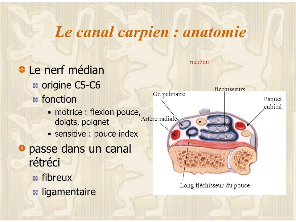 Le canal carpien : anatomie