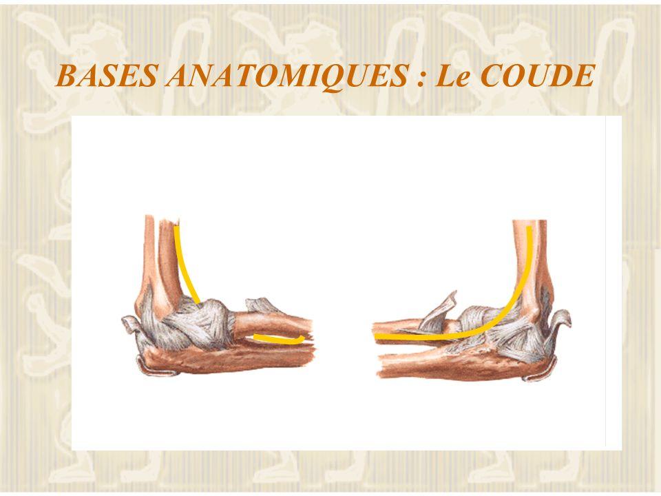 BASES ANATOMIQUES : Le COUDE