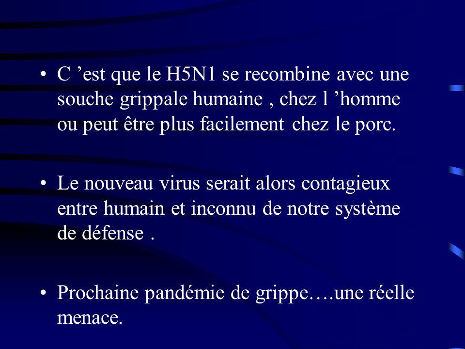 C 'est que le H5N1 se recombine avec une souche grippale humaine , chez l 'homme ou peut être plus facilement chez le porc.