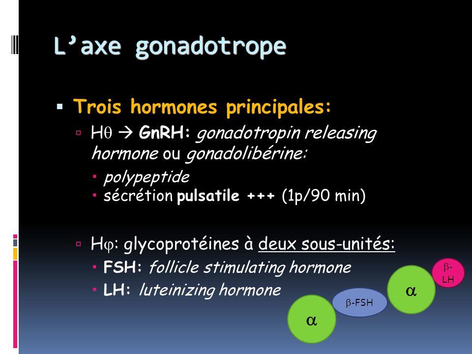 L'axe gonadotrope Trois hormones principales:  