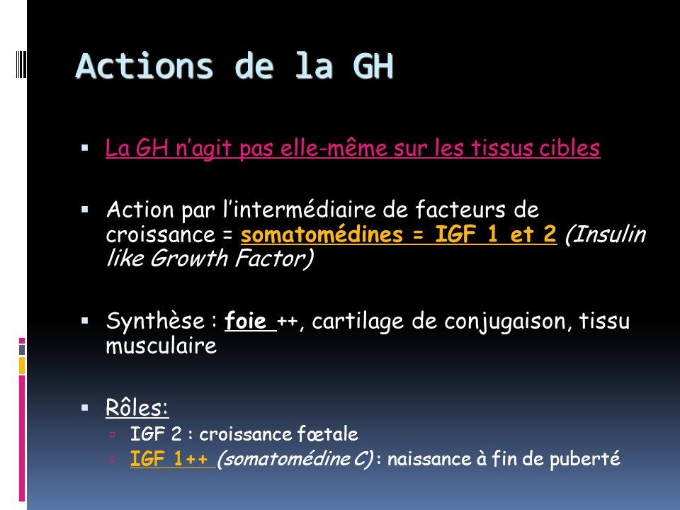 Actions de la GH La GH n'agit pas elle-même sur les tissus cibles