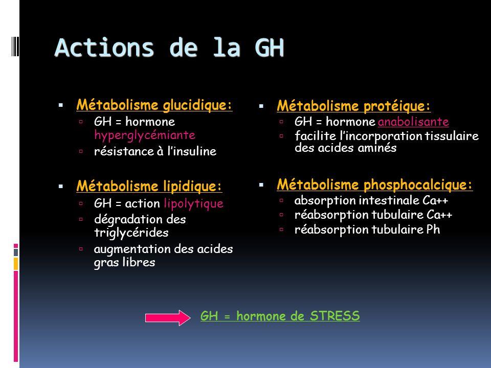 Actions de la GH Métabolisme glucidique: Métabolisme protéique: