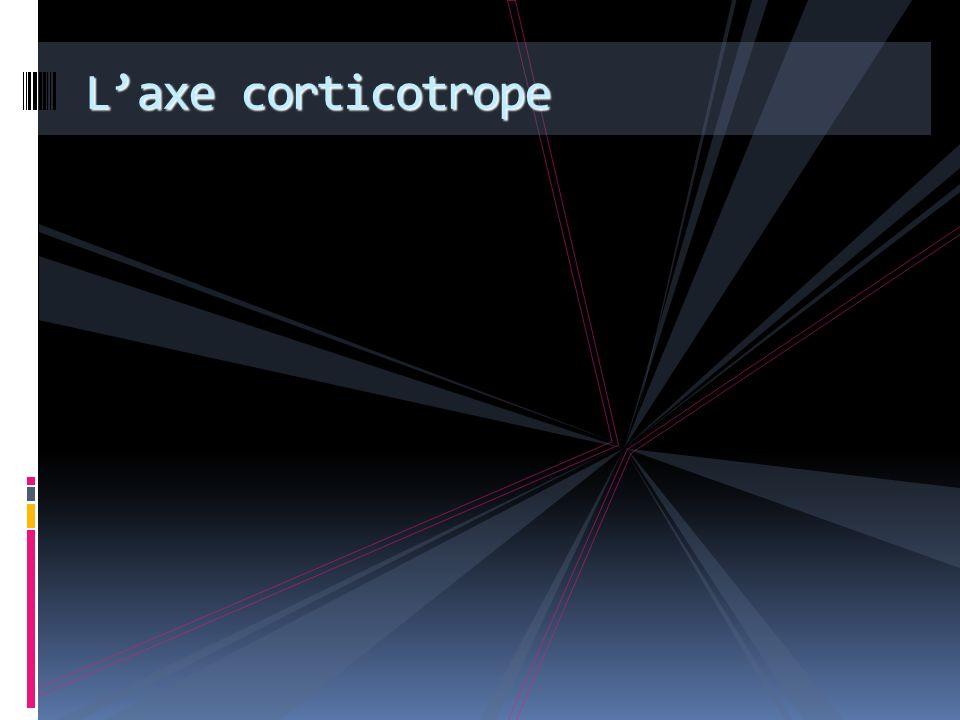 L'axe corticotrope