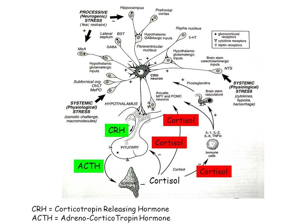 CRH ACTH Cortisol CRH = Corticotropin Releasing Hormone