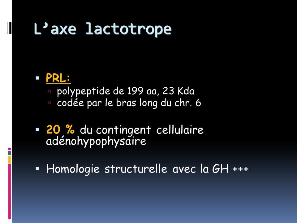 L'axe lactotrope PRL: 20 % du contingent cellulaire adénohypophysaire