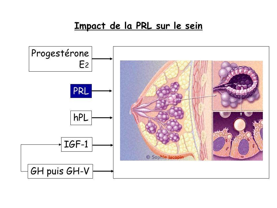 Impact de la PRL sur le sein