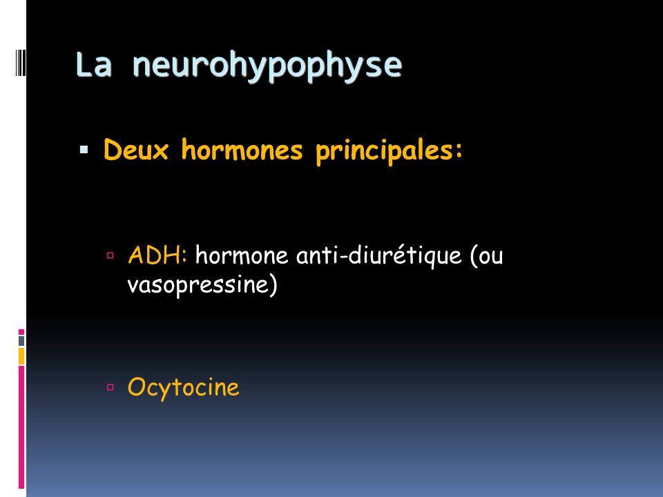 La neurohypophyse Deux hormones principales: