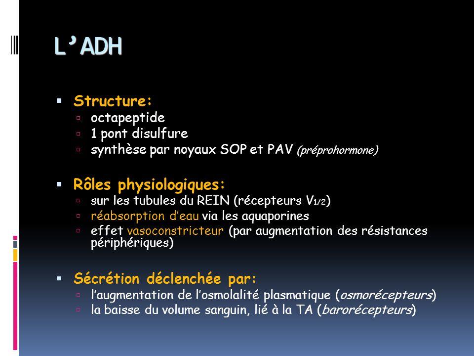 L'ADH Structure: Rôles physiologiques: Sécrétion déclenchée par: