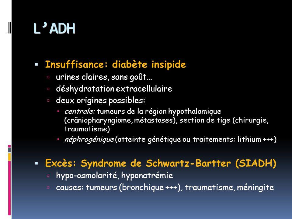 L'ADH Insuffisance: diabète insipide
