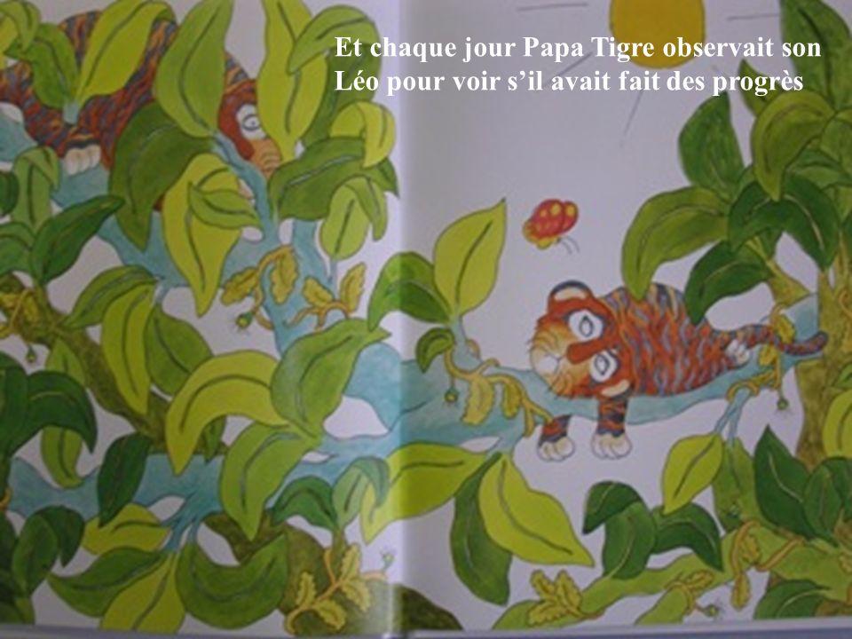 Et chaque jour Papa Tigre observait son Léo pour voir s'il avait fait des progrès