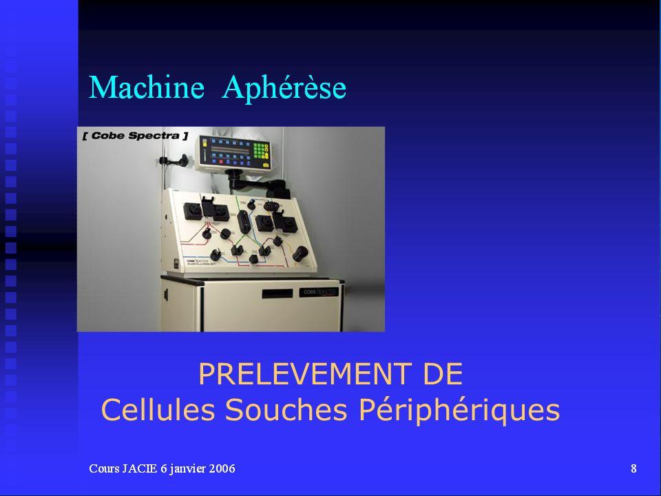 Cellules Souches Périphériques