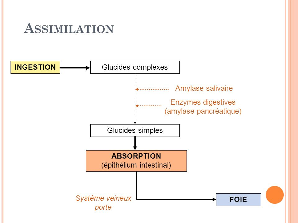 Assimilation INGESTION Glucides complexes Amylase salivaire