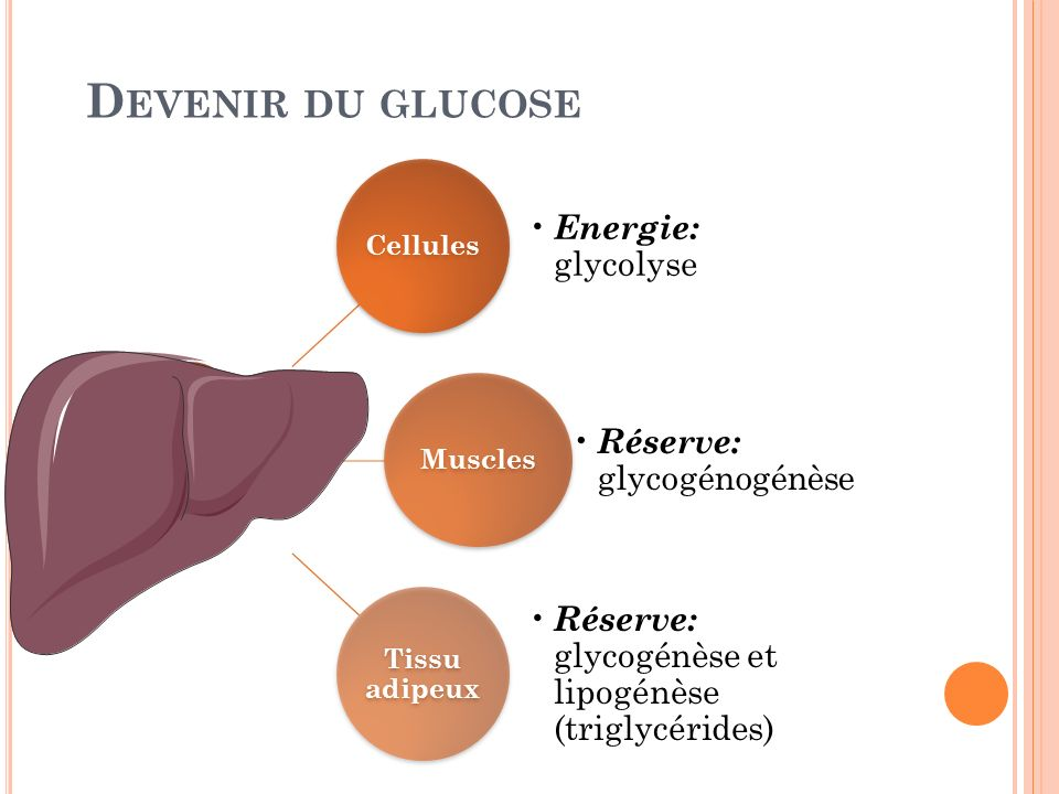 Devenir du glucose Cellules Energie: glycolyse Muscles