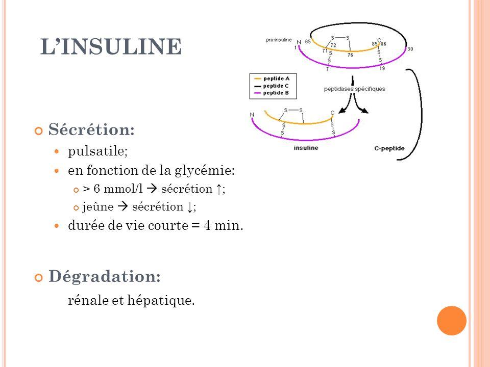 L'INSULINE Sécrétion: Dégradation: pulsatile;