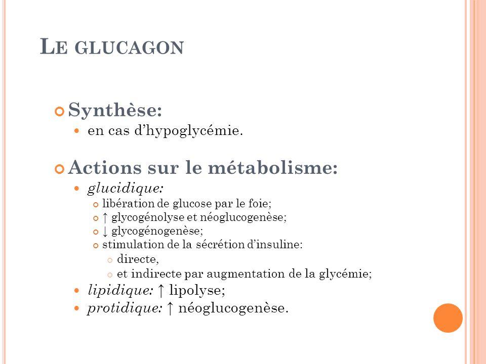 Le glucagon Synthèse: Actions sur le métabolisme: