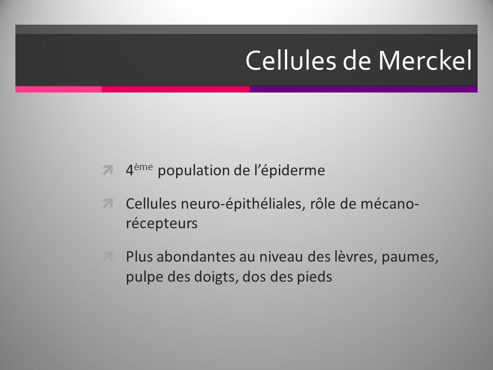 Cellules de Merckel 4ème population de l'épiderme