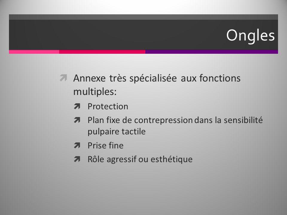Ongles Annexe très spécialisée aux fonctions multiples: Protection
