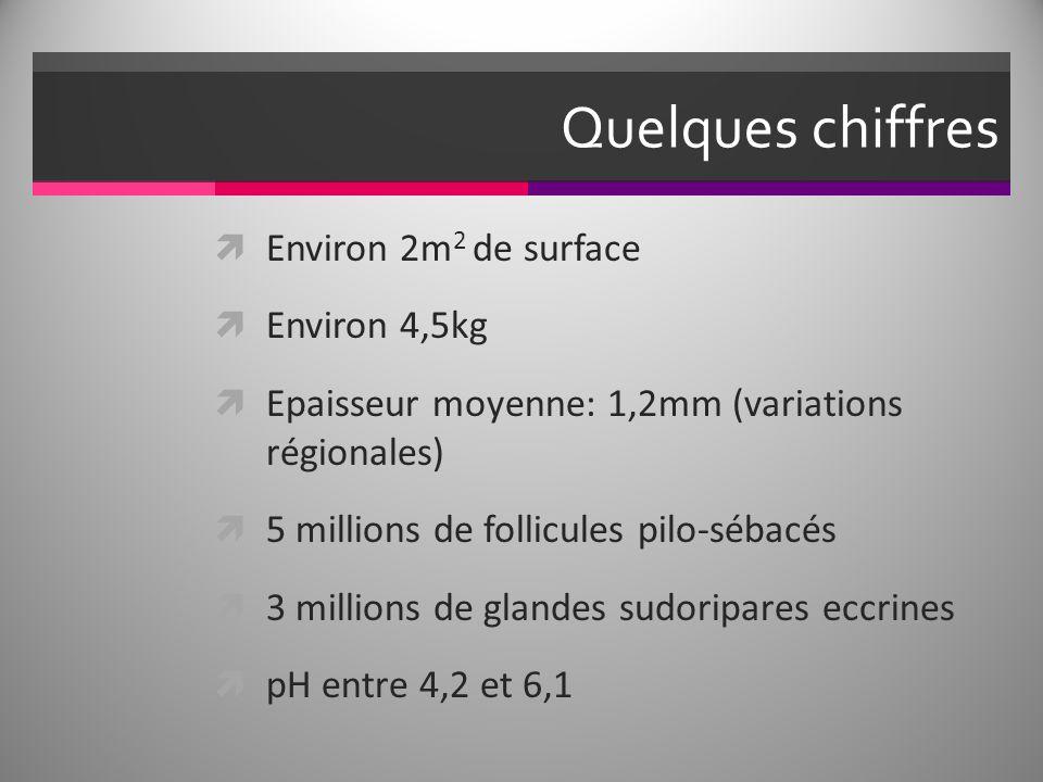 Quelques chiffres Environ 2m2 de surface Environ 4,5kg