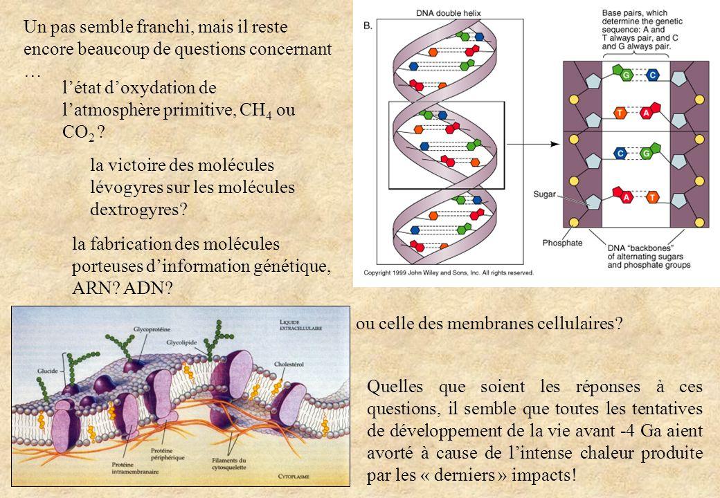 la fabrication des molécules porteuses d'information génétique, ARN