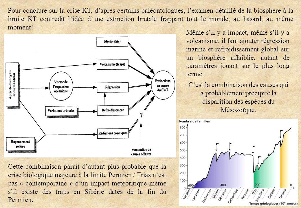 Pour conclure sur la crise KT, d'après certains paléontologues, l'examen détaillé de la biosphère à la limite KT contredit l'idée d'une extinction brutale frappant tout le monde, au hasard, au même moment!