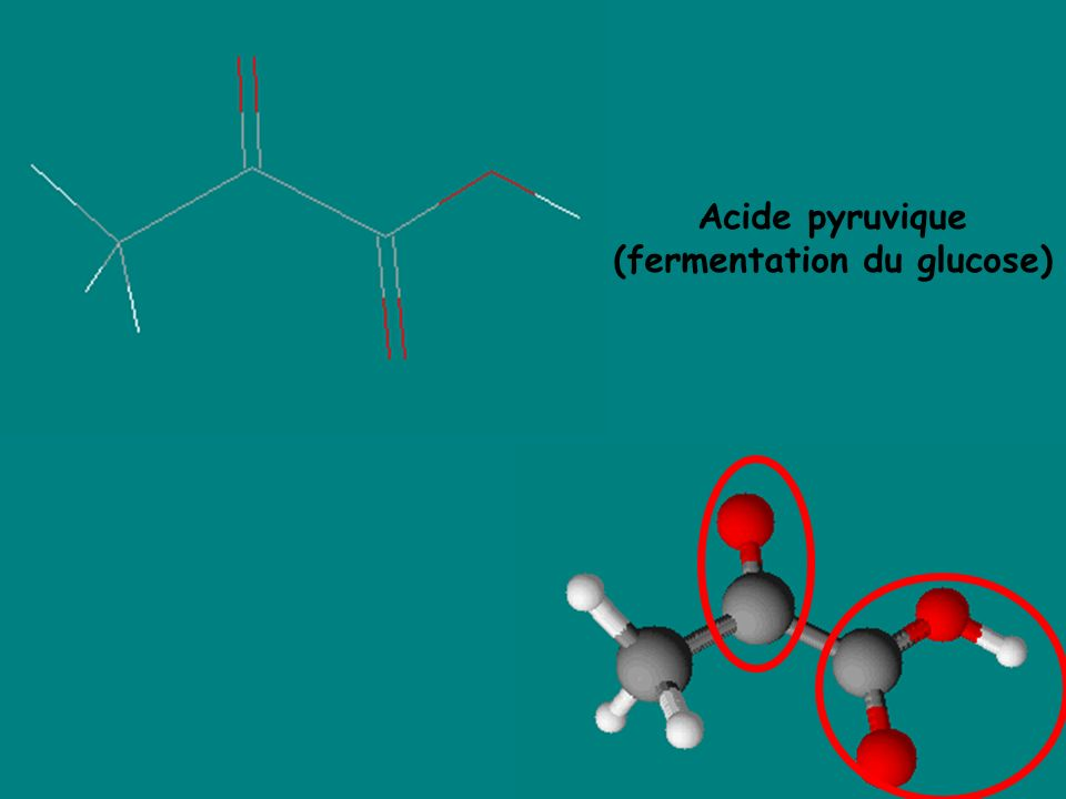 (fermentation du glucose)