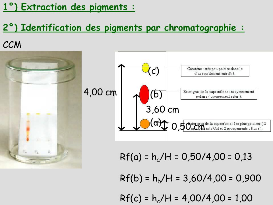 1°) Extraction des pigments :