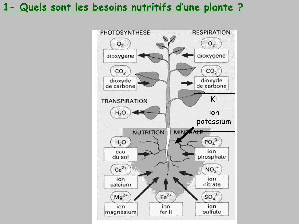 1- Quels sont les besoins nutritifs d'une plante